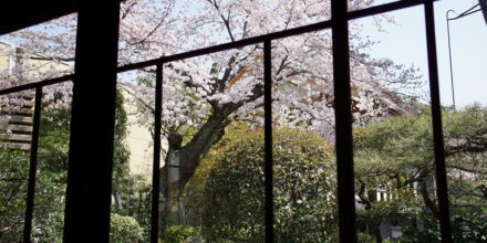 CHERRY BLOSSOM—Model of Way of Life HBS Believers Should Follow